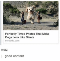 if you swipe you will not be disappointed: Perfectly Timed Photos That Make  Dogs Look Like Giants  thedodo.com  may:  good content if you swipe you will not be disappointed