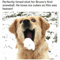(@hilarious.ted) is the best animal meme page on the Gram, hands down!: Perfectly timed shot for Bruno's first  snowball. He loves ice cubes so this was  heaven! (@hilarious.ted) is the best animal meme page on the Gram, hands down!