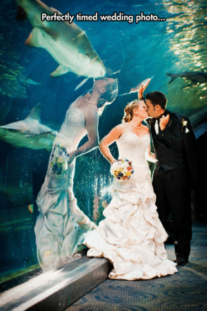 srsfunny:Something Fishy Going On Here: Perfectly timed wedding photo... srsfunny:Something Fishy Going On Here