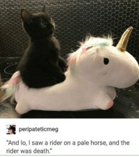 "Well, you dont want a black cat crossing your path.: peripateticmeg  ""And lo, I saw a rider on a pale horse, and the  rider was death."" Well, you dont want a black cat crossing your path."