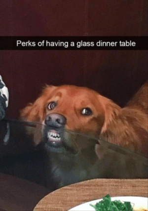 Funny, Memes, and Animal: Perks of having a glass dinner table 50 Funny Animal Memes To Brighten Your Day | CutesyPooh