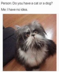 Funny, Memes, and Idea: Person: Do you have a cat or a dog?  Me: I have no idea Funny Memes 2018 - The Year is almost Ending