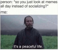 """Life, Memes, and 🤖: person:  """"so you just look at memes  all day instead of socializing?""""  me:  It's a peaceful life."""