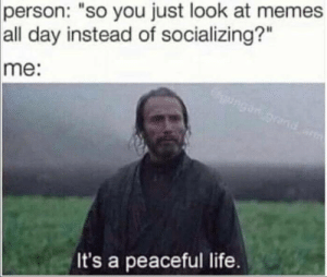 """Peaceful indeed by djquizzle2233 MORE MEMES: person:  """"so you just look at memes  all day instead of socializing?""""  me:  It's a peaceful life. Peaceful indeed by djquizzle2233 MORE MEMES"""
