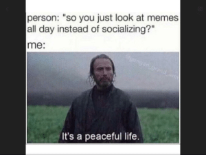 """Peaceful indeed. by truckaduk MORE MEMES: person: """"so you just look at memes  all day instead of socializing?""""  me:  It's a peaceful life Peaceful indeed. by truckaduk MORE MEMES"""