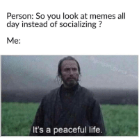 Memes All: Person: So you look at memes all  day instead of socializing?  Me:  It's a peaceful life.