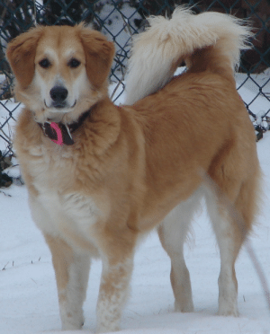 pet-corner:  A heavy winter coat with countershading in a mixed-breed dog / Cute Cats: pet-corner:  A heavy winter coat with countershading in a mixed-breed dog / Cute Cats