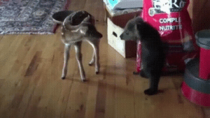 Bambi, Cats, and Cute: pet-corner:  Bambi and BalooVisit our pet site!