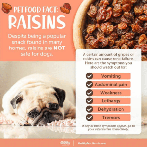 Dogs, Food, and Memes: PET FOOD FACT:  RAISINS  Despite being a popular  snack found in many  homes, raisins are NOT  safe for dogs.  A certain amount of grapes or  raisins can cause renal failure.  Here are the symptoms you  should watch out for:  Vomiting  Abdominal pain  Weakness  Lethargy  Dehydration  Tremors  If any of these symptoms appear, go to  your veterinarian immediately.  Opets  HealthyPets.Mercola.com Raisins are categorized under foods that are toxic to pets.  http://ow.ly/Y85o30p4dOc