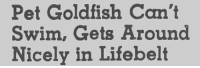Goldfish, Tumblr, and Blog: Pet Goldfish Can't  Swim, Gets Around  Nicely in Lifebelt yesterdaysprint:   The Montana Standard, Butte, Montana, February 11, 1955