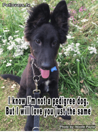 Would you love me?: Pet lowers  I know Am not a pedigree dog,  But Willove you the same  Photo by: Nicole Paylor Would you love me?