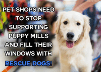 Can you imagine?  <3 #adopt via K9 Instinct: PET SHOPS NEED  TO STOP  SUPPORTING  PUPPY MILLS  AND FILL THEIR  WINDOWS WITH  RESCUE DOGS!  K9 INSTINC Can you imagine?  <3 #adopt via K9 Instinct