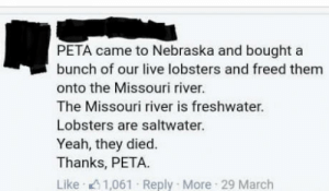 Tbh, Tumblr, and Yeah: PETA came to Nebraska and bought a  bunch of our live lobsters and freed them  onto the Missouri river.  The Missouri river is freshwater.  Lobsters are saltwater.  Yeah, they died.  Thanks, PETA  Like . 11,061 . Reply . More-29 March jacketrock:sums up peta pretty well tbh