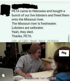 Yeah, Peta, and Live: PETA came to Nebraska and bought a  bunch of our live lobsters and freed them  onto the Missouri river.  The Missouri river is freshwater.  Lobsters are saltwater.  Yeah, they died.  Thanks, PETA.  PETA  CAN I GET YOU SOME TAP WATER