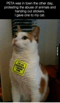 Animals, Memes, and Peta: PETA was in town the other day,  protesting the abuse of animals and  handing out stickers.  I gave one to my cat.  8