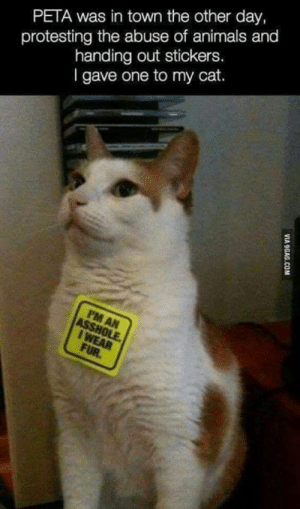 Animals, Memes, and Peta: PETA was in town the other day,  protesting the abuse of animals and  handing out stickers.  l gave one to my cat.  8 DV JAFO