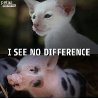 "Tumblr, Blog, and Free: peta2  FREE FOR ALL  I SEE NO DIFFERENCE <p><a class=""tumblr_blog"" href=""http://mnisikakos.tumblr.com/post/143906676638"">mnisikakos</a>:</p> <blockquote> <p><a class=""tumblr_blog"" href=""http://peta2.tumblr.com/post/143901645320"">peta2</a>:</p> <blockquote> <blockquote><p><b>Do you?</b></p></blockquote> </blockquote> <p>i think the top one is a cat and the bottom one is a pig<br/></p> </blockquote>"
