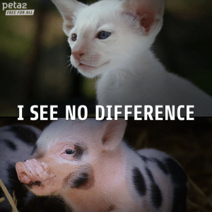 Target, Tumblr, and Blog: peta2  FREE FOR ALL  I SEE NO DIFFERENCE mnisikakos:  peta2:  Do you?  i think the top one is a cat and the bottom one is a pig