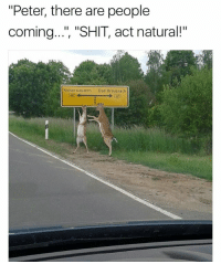 """Bad, Deer, and Memes: """"Peter, there are people  coming... 'SHIT, act natural!""""  coming..."""", """"SHIT, act natural!""""  Kaiserslautern Bad Kreuznach Two deer leaving a gay bar. One turns to his friend in disgust and says, """"man, I can't believe you blew twenty bucks in there."""""""