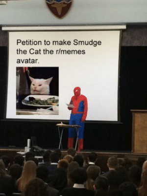 Memes, Avatar, and Cat: Petition to make Smudge  the Cat the r/memes  avatar. He deserves it