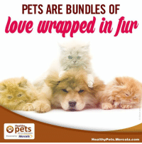 mercola: PETS ARE BUNDLES OF  love wrapped in  Healthy  With Dr. Karen Becker  Presented by Mercola  Healthy Pets Mercola.com