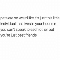 Friends, Life, and Weird: pets are so weird like it's just this little  individual that lives in your house n  you can't speak to each other but  you're just best friends All I need in this life of sin @mybestiesays