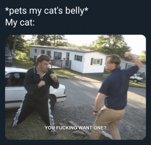 Please, I want no trouble: *pets my cat's belly*  Му cat:  YOU FUCKING WANT ONE? Please, I want no trouble