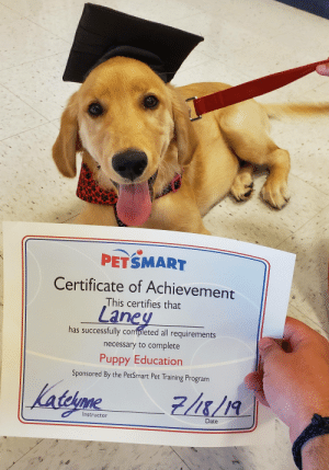 Date, Petsmart, and Puppy: PETSMART  Certificate of Achievement  This certifies that  Laney  has successfully completed all requirements  necessary to complete  Puppy Education  Sponsored By the PetSmart Pet Training Program  lalesone  telme  Instructor  Date This is Laney. She just graduated from puppy class. She's kind of excited about it.