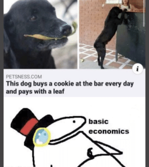 Good boy money: PETSNESS.COM  This dog buys a cookie at the bar every day  and pays with a leaf  basic  economics  NN Good boy money