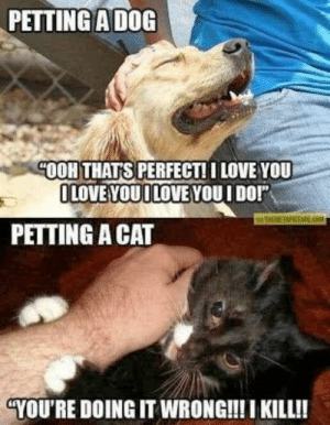 Funny Animal Memes Of The Day – 32 Pics E9 - Lovely Animals World #dogmemeshilarious #dogmemesfunny #dogmemes #catmemes #funnycats: PETTING A DOG  HOOH THATS PERFECT! I LOVE YOU  LOVE YOUI LOVE YOUI DO!  PETTING A CAT  YOU'RE DOING IT WRONG!!I KILL!! Funny Animal Memes Of The Day – 32 Pics E9 - Lovely Animals World #dogmemeshilarious #dogmemesfunny #dogmemes #catmemes #funnycats