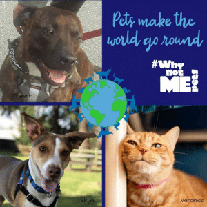 Reduce * Reuse * Recycle * Rescue Happy Earth Day from Pawsitive Alliance and the #WhynotMEpets! Featured here to celebrate with you and encourage adopting your new best friend are Cheech (available at Seattle Dogs Homeless Program), Skye (available at Homeward Pet Adoption Center), and Veronica (available at Auburn Valley Humane Society)! #adopt #earthday #WhynotCheech #WhynotSkye #WhynotVeronica Pet Connection Magazine Healthy Paws Pet Insurance Dirtie Dog Photography: Pety make the  not  Skye  Veronico Reduce * Reuse * Recycle * Rescue Happy Earth Day from Pawsitive Alliance and the #WhynotMEpets! Featured here to celebrate with you and encourage adopting your new best friend are Cheech (available at Seattle Dogs Homeless Program), Skye (available at Homeward Pet Adoption Center), and Veronica (available at Auburn Valley Humane Society)! #adopt #earthday #WhynotCheech #WhynotSkye #WhynotVeronica Pet Connection Magazine Healthy Paws Pet Insurance Dirtie Dog Photography