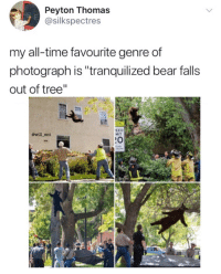 "Memes, Bear, and Time: Peyton Thomas  @silkspectres  my all-time favourite genre of  photograph is ""tranquilized bear falls  out of tree'""  ewil ent  EED  MIT  :O <p>So graceful. via /r/memes <a href=""https://ift.tt/2Hs6khq"">https://ift.tt/2Hs6khq</a></p>"