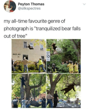 "Pretty epic not gunna lie via /r/memes https://ift.tt/2HVuxxg: Peyton Thomas  @silkspectres  my all-time favourite genre of  photograph is ""tranquilized bear falls  out of tree""  100  ewill ent  EED  MIT  :0 Pretty epic not gunna lie via /r/memes https://ift.tt/2HVuxxg"