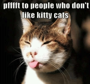 Cats, Memes, and 🤖: pfffft to people who don't  like kitty cats