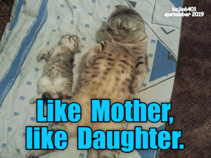 Mother, Daughter, and Like: Ph  bajlo6401  spetember 2019  Like Mother,  lIke Daughter