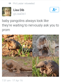 Dib: Phil Lester retweeted  Lisa Dib  @LisaDib1  baby pangolins always look like  they're waiting to nervously ask you to  prom  7:31 am 17 Apr 16