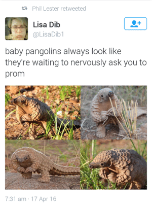 starsel:  sociallyawkwardphantasy:  Same  reblog if youd say yes : Phil Lester retweeted  Lisa Dib  @LisaDib1  baby pangolins always look like  they're waiting to nervously ask you to  prom  7:31 am 17 Apr 16 starsel:  sociallyawkwardphantasy:  Same  reblog if youd say yes