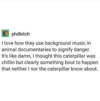 Ariana grande is my idol: phodbitch  I love how they use background music in  animal documentaries to signify danger.  It's like damn, thought this caterpillar was  chillin but clearly something bout to happen  that neither I nor the caterpillar know about. Ariana grande is my idol