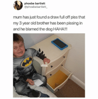Blamed it on the dog.. 😂💀 WSHH: phoebe bartlett  @phoebebartlett  mum has just found a draw full off piss that  my 3 year old brother has been pissing in  and he blamed the dog HAHA!!! Blamed it on the dog.. 😂💀 WSHH