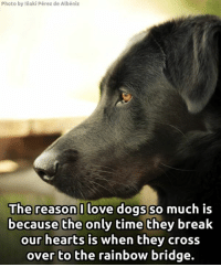 <3: Photo by Inaki Pérez de Albéniz  The reason I love dogs so  much is  because the only time they break  our hearts is when they cross  over to the rainbow bridge. <3