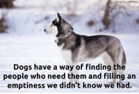 Dogs, Memes, and Truth: Photo by Irene Mei  Dogs have a way of finding the  people who need them and filling an  emptiness we didn't know we had. Truth!