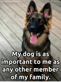 Family, Memes, and True: Photo by Leslie Greenson  K9 Instinct  My dog is as  important to me as  any other member  of my family. It's true!