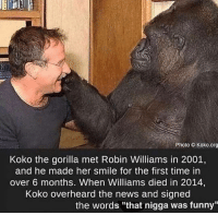 """Funny, News, and Robin Williams: Photo Koko.org  Koko the gorilla met Robin Williams in 2001,  and he made her smile for the first time in  over 6 months. When Williams died in 2014,  Koko overheard the news and signed  the words """"that nigga was funny"""""""