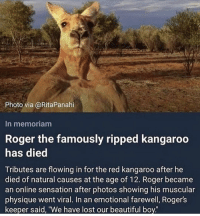 "R.I.P to Roger: Photo via @RitaPanahi  In memoriam  Roger the famously ripped kangaroo  has died  Tributes are flowing in for the red kangaroo after he  died of natural causes at the age of 12. Roger became  an online sensation after photos showing his muscular  physique went viral. In an emotional farewell, Rogers  keeper said, ""We have lost our beautiful boy R.I.P to Roger"