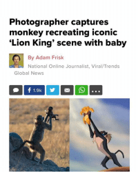Memes, News, and Cool: Photographer captures  monkey recreating iconic  'Lion King' scene with baby  By Adam Frisk  National Online Journalist, Viral/Trends  Global News This is so cool 😭😭 (Global News-Adam Frisk)