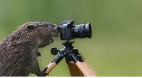 "Photographer Leopold Kanzler worked with this beaver for two weeks hiding apple slices in his camera to get this shot. ""Im not sure who had more fun, me or the beaver, but it seemed more than happy with receiving so many tasty treats."": Photographer Leopold Kanzler worked with this beaver for two weeks hiding apple slices in his camera to get this shot. ""Im not sure who had more fun, me or the beaver, but it seemed more than happy with receiving so many tasty treats."""