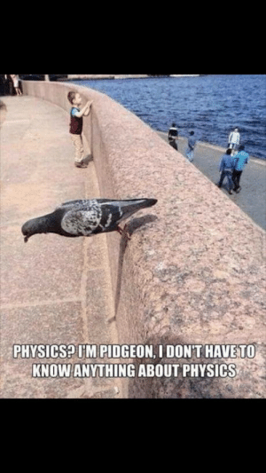 Pidgeon: PHYSICSP I'M PIDGEON, I DON'T HAVE TO  KNOW ANYTHING ABOUT PHYSICS Pidgeon