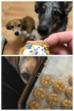 I had a dog treat business and these guys were an integral part of the team - introducing Quality Control: PIC•COLLAGE I had a dog treat business and these guys were an integral part of the team - introducing Quality Control