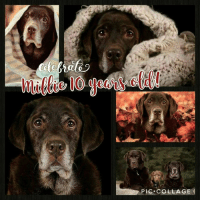 Hip hop hooray, our sweet Millie is 10 years old!: PIC COLLAGE Hip hop hooray, our sweet Millie is 10 years old!