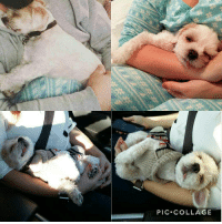 Master of Naps and Derps: PIC COLLAGE Master of Naps and Derps